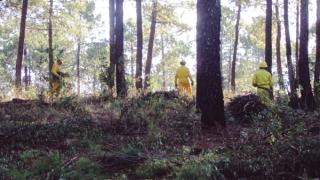 betanzos insta a gestionar la biomasa
